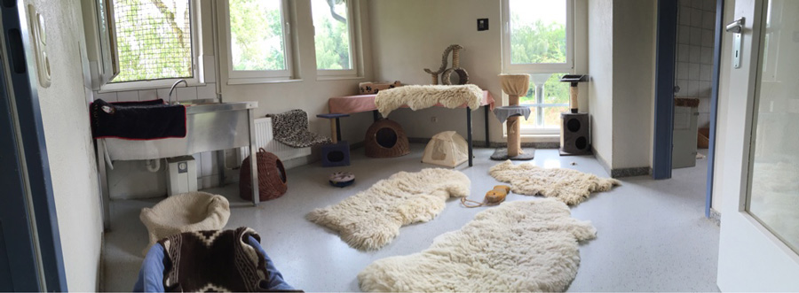 Group accomodations for Cats