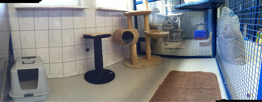 Individual accomodations for Cats